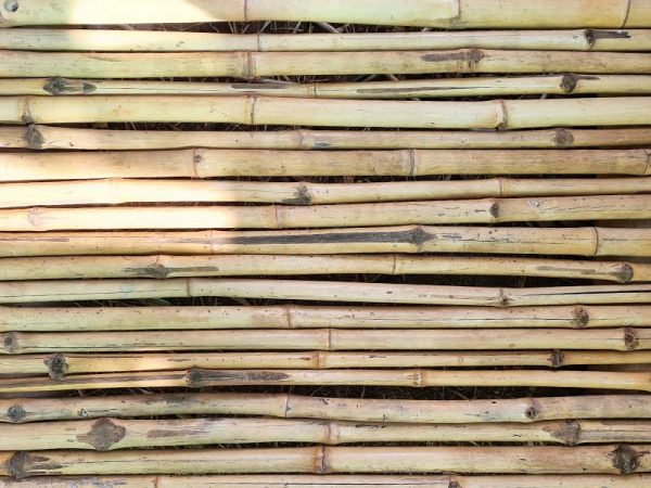 Beema bamboo (Bambussa Balcooa Roxb) small poles